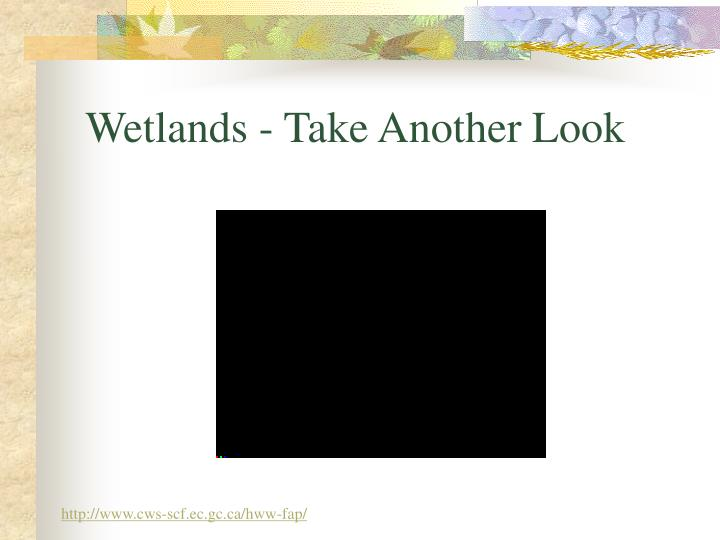 Wetlands take another look