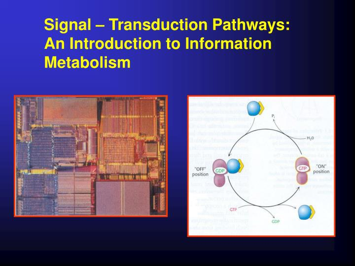 Signal – Transduction Pathways: