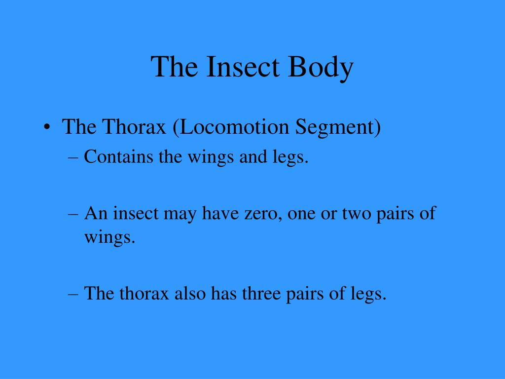 The Insect Body