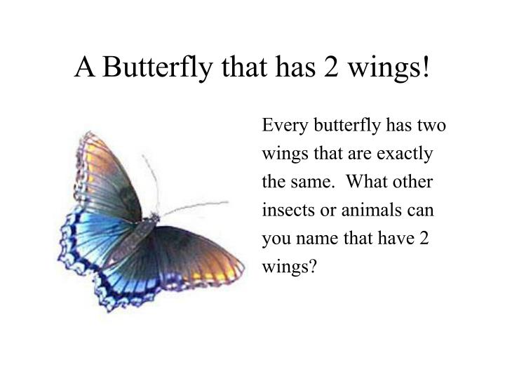 A butterfly that has 2 wings