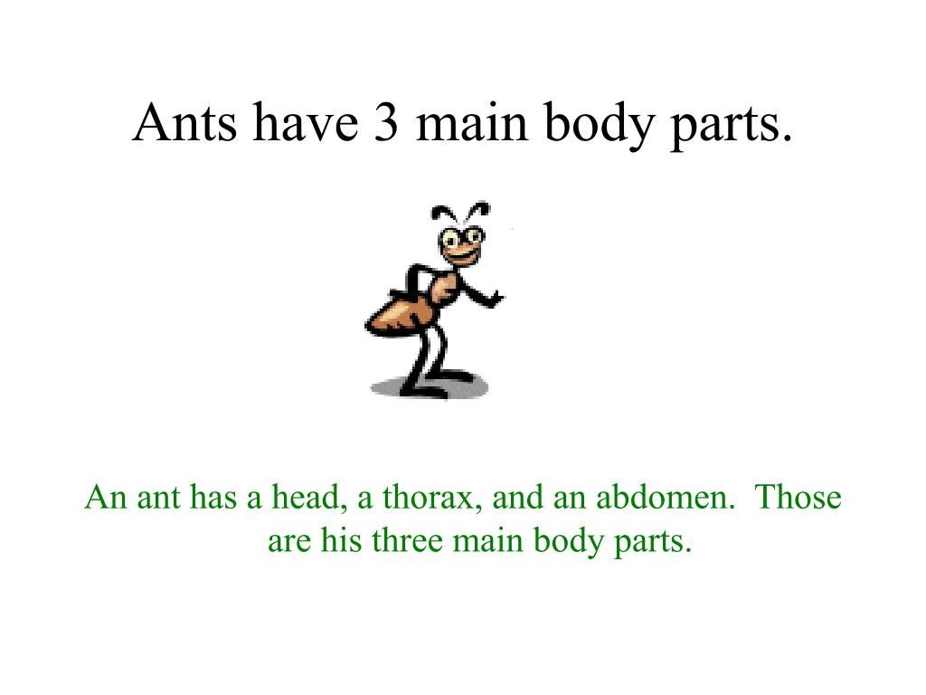 Ants have 3 main body parts.