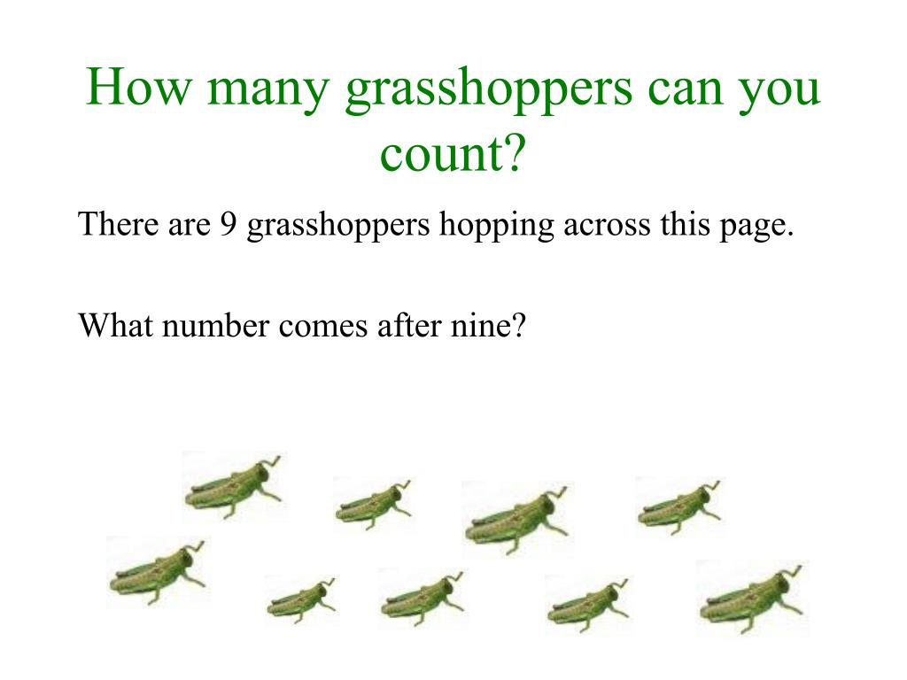 How many grasshoppers can you count?