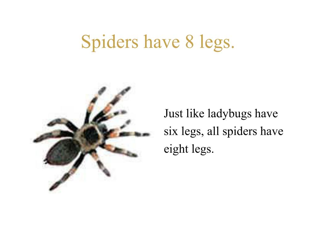 Spiders have 8 legs.