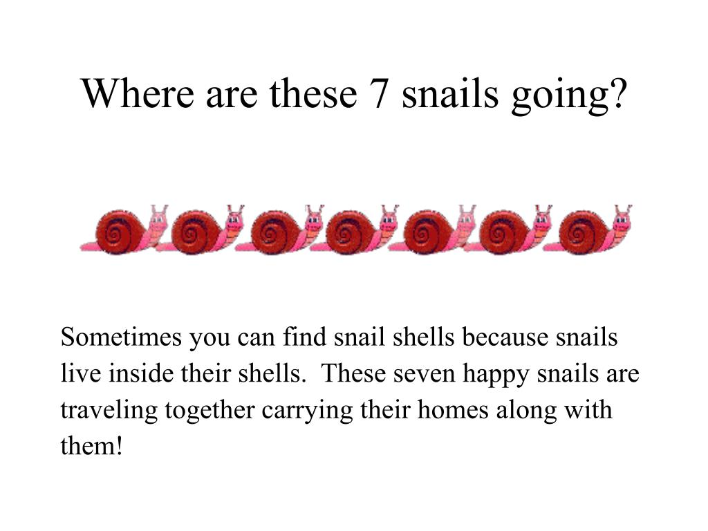 Where are these 7 snails going?