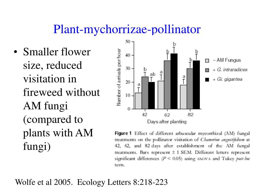 Plant-mychorrizae-pollinator