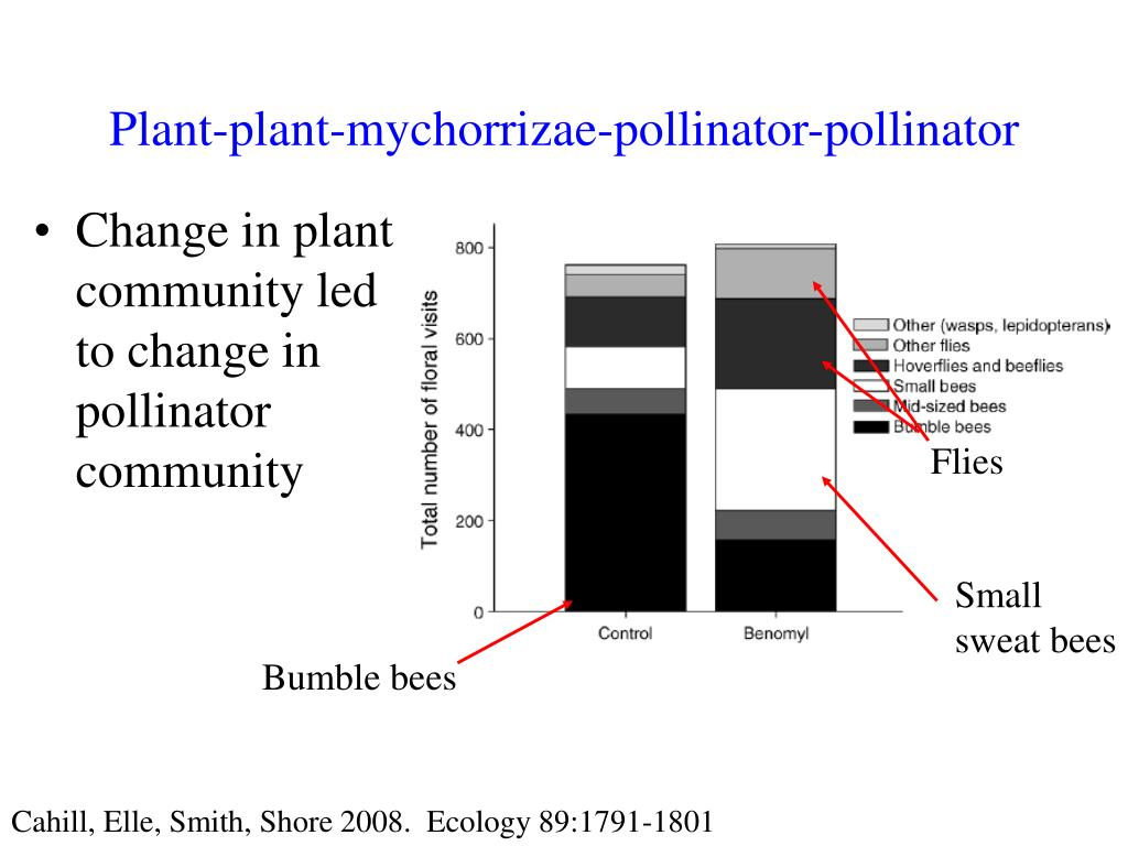 Plant-plant-mychorrizae-pollinator-pollinator