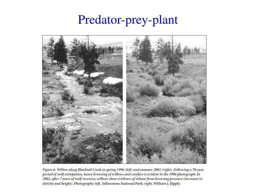 Predator-prey-plant
