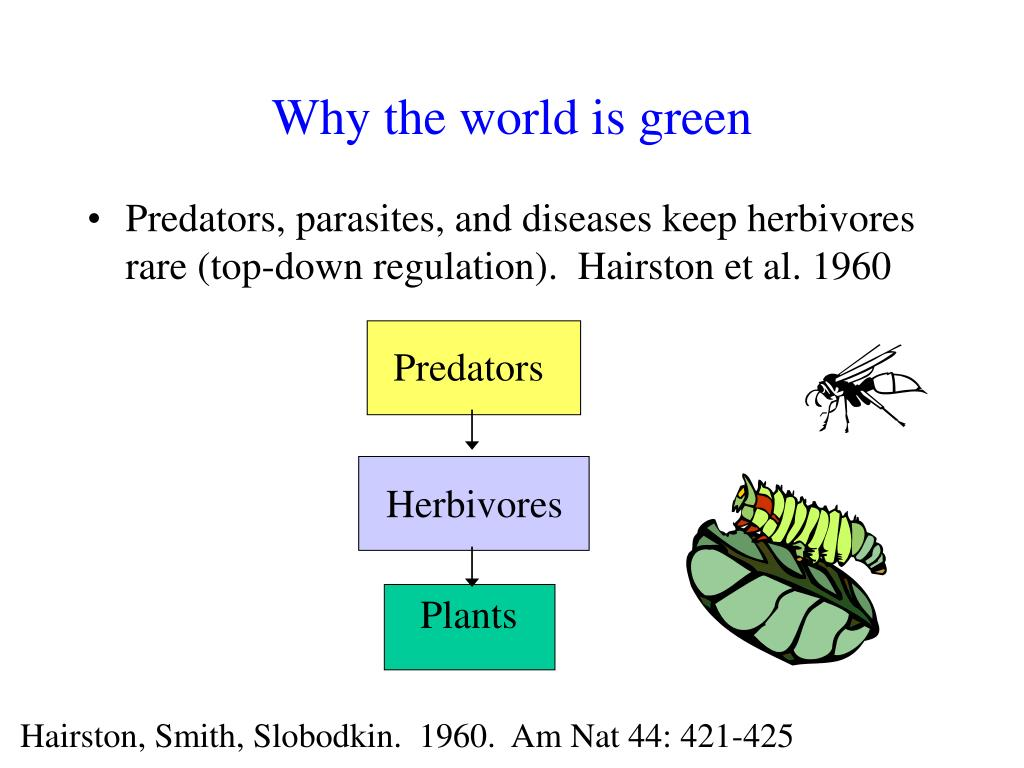 Why the world is green