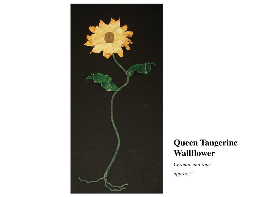 Queen Tangerine Wallflower