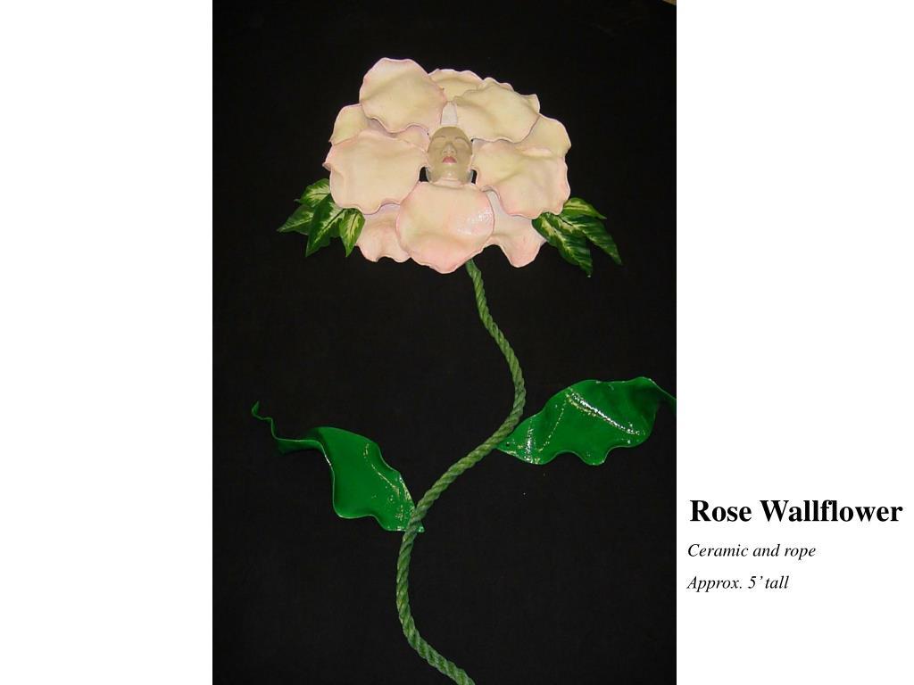 Rose Wallflower
