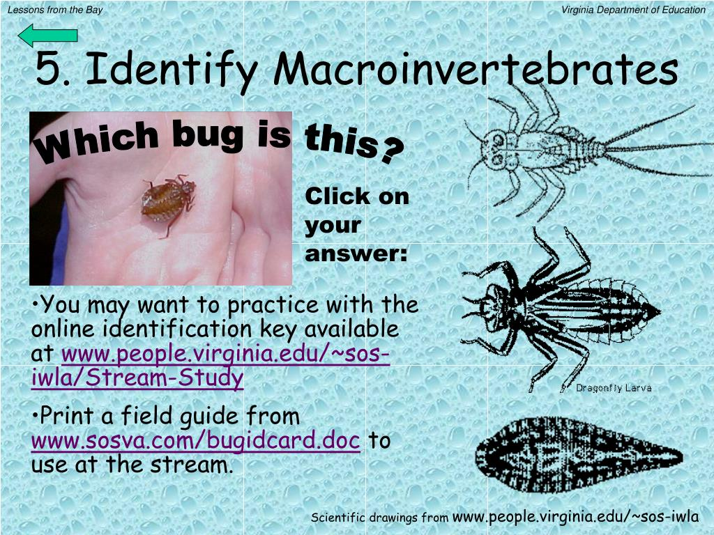 5. Identify Macroinvertebrates