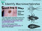 5 identify macroinvertebrates