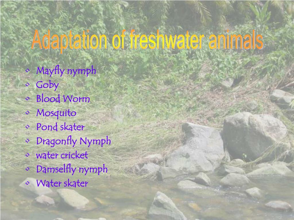 Adaptation of freshwater animals