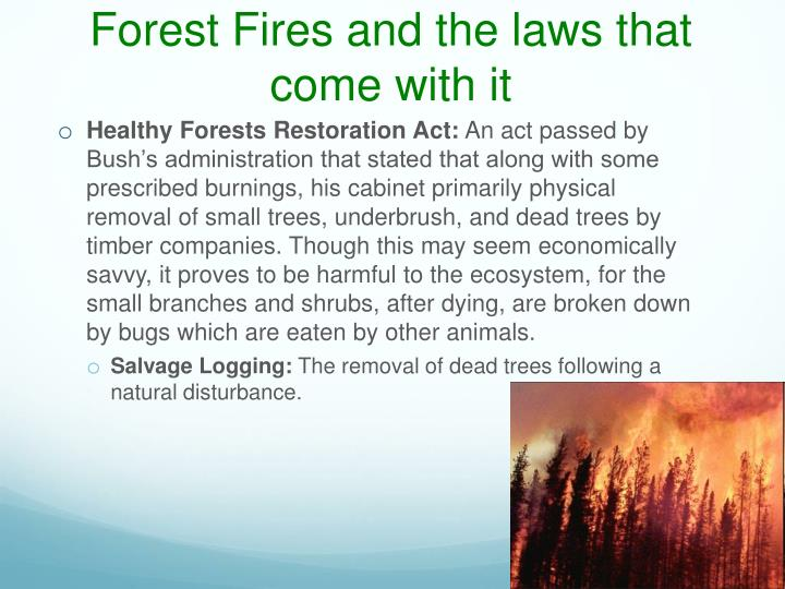 Forest Fires and the laws that come with it