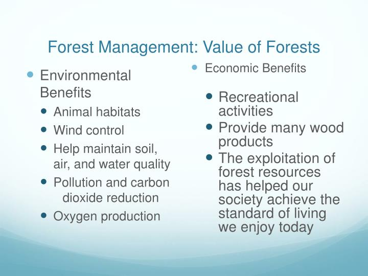 Forest management value of forests