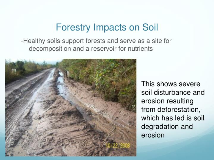 Forestry impacts on soil