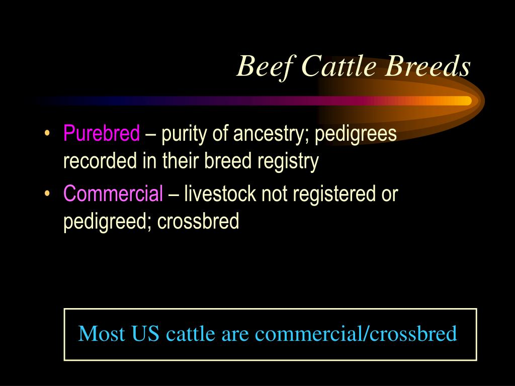 Most US cattle are commercial/crossbred