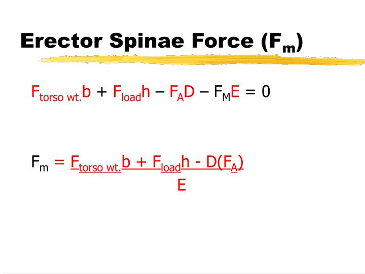 Erector Spinae Force (F