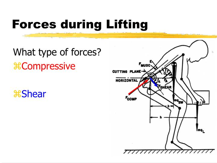 Forces during lifting