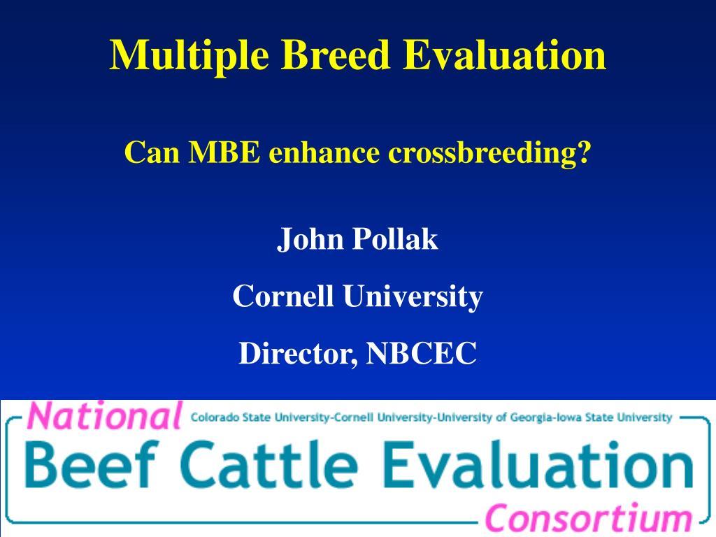 multiple breed evaluation can mbe enhance crossbreeding