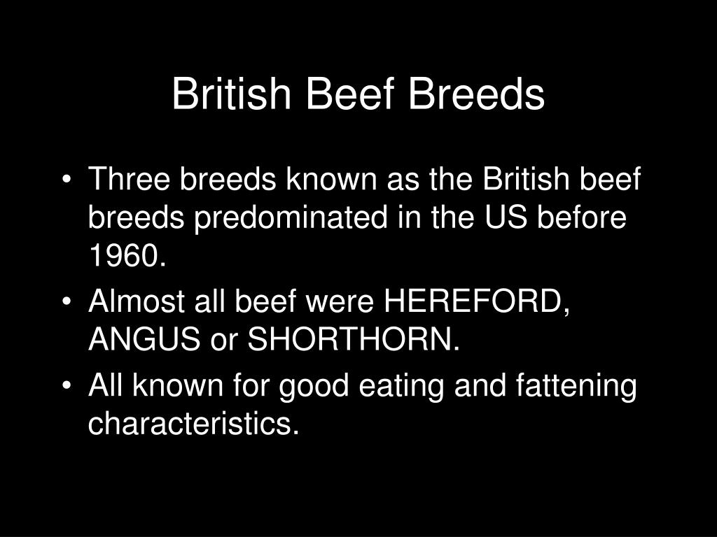 British Beef Breeds