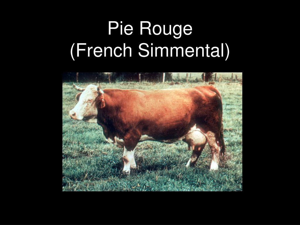 Pie Rouge