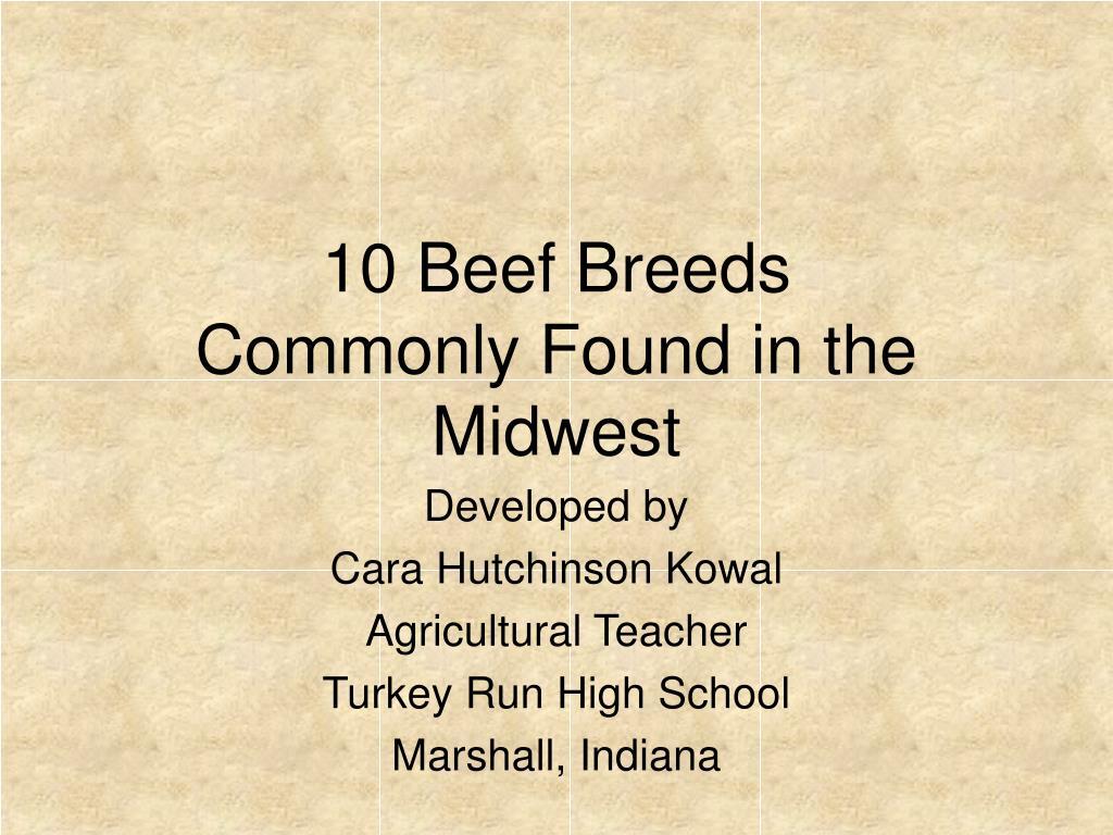 10 Beef Breeds