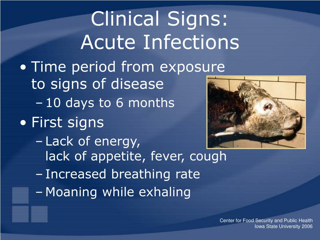Clinical Signs: