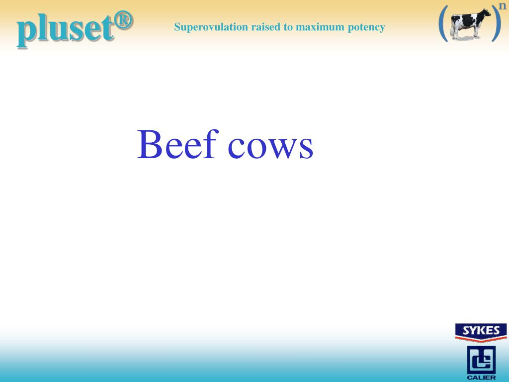 Beef cows