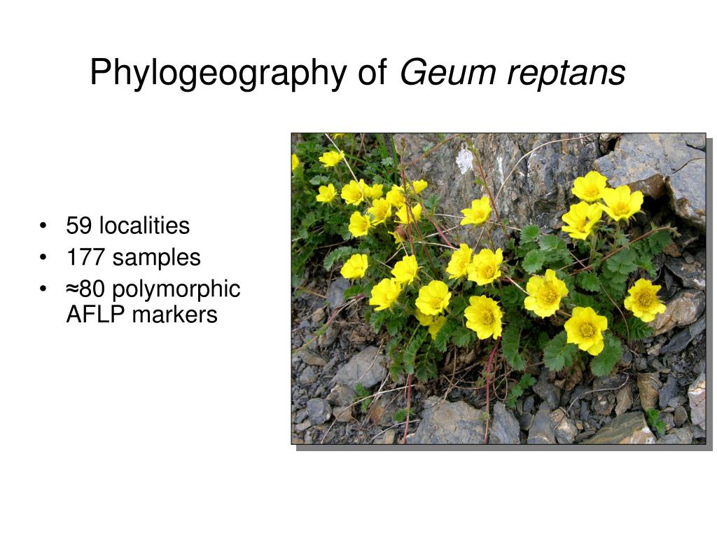 Phylogeography of