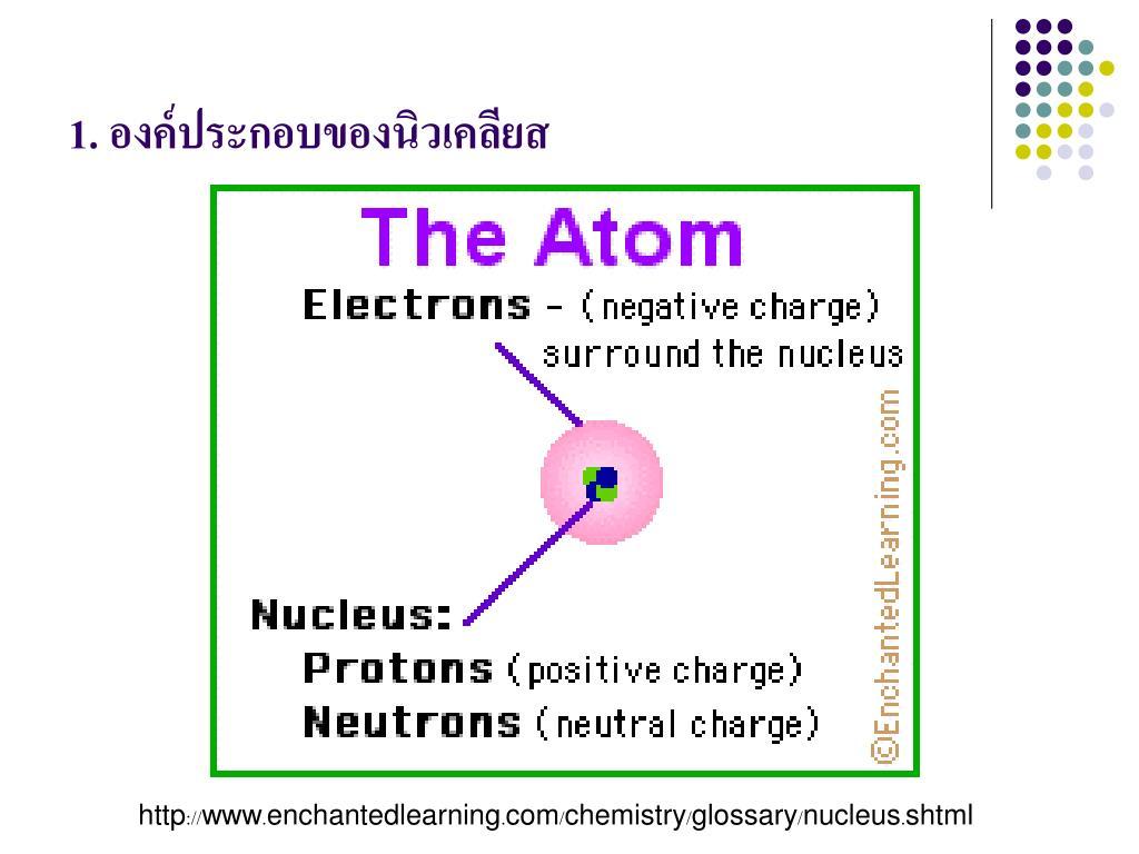 1. องค์ประกอบของนิวเคลียส