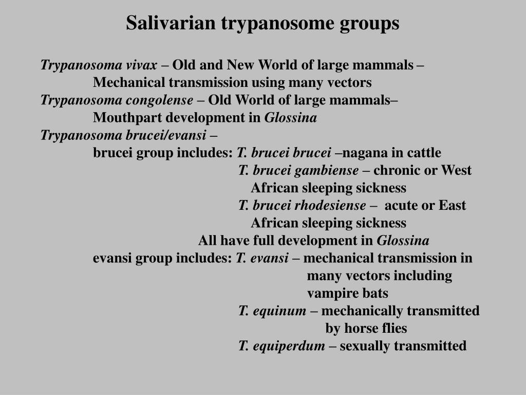 Salivarian trypanosome groups