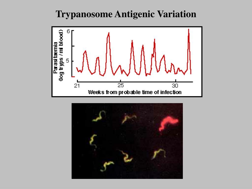 Trypanosome Antigenic Variation