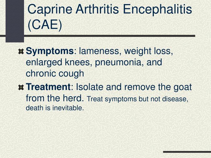 Caprine Arthritis Encephalitis (CAE)