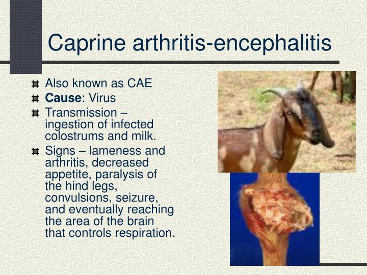 Caprine arthritis-encephalitis