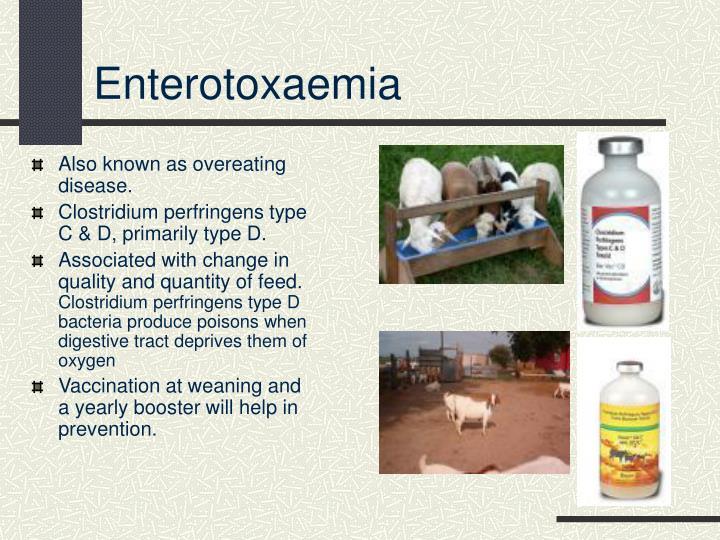 Enterotoxaemia