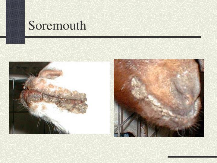 Soremouth