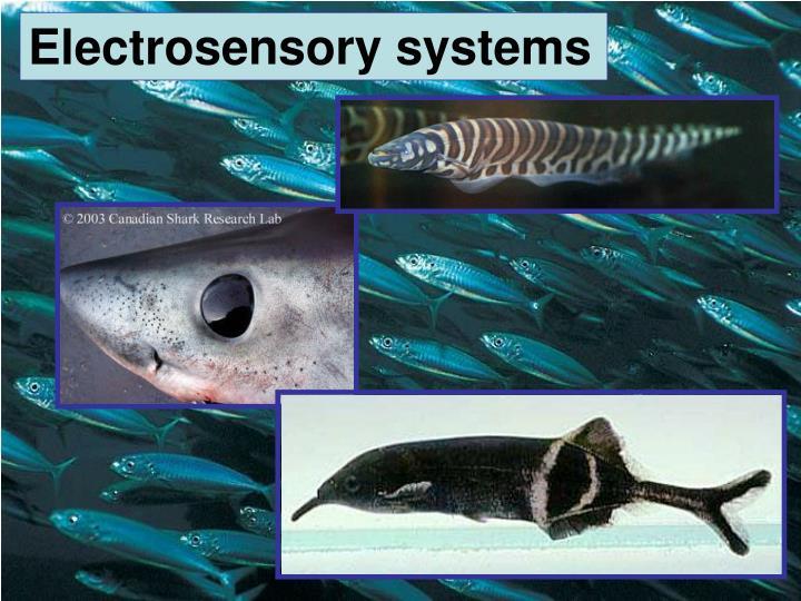 Electrosensory systems