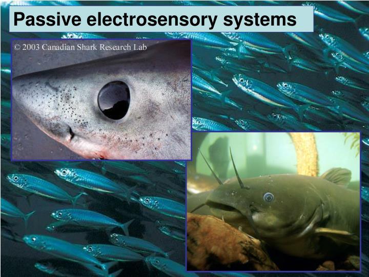 Passive electrosensory systems