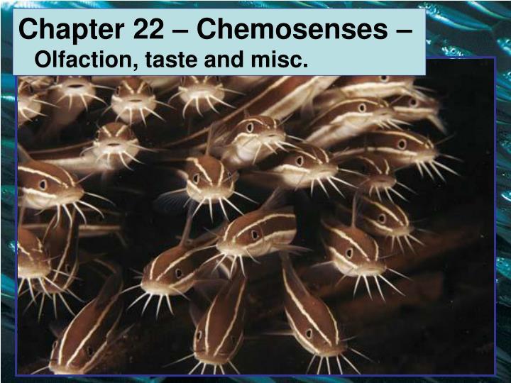 Chapter 22 – Chemosenses –
