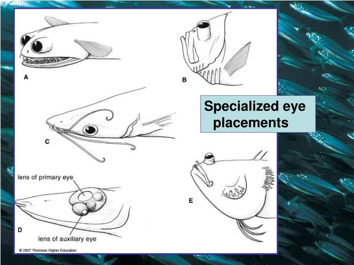 Specialized eye placements