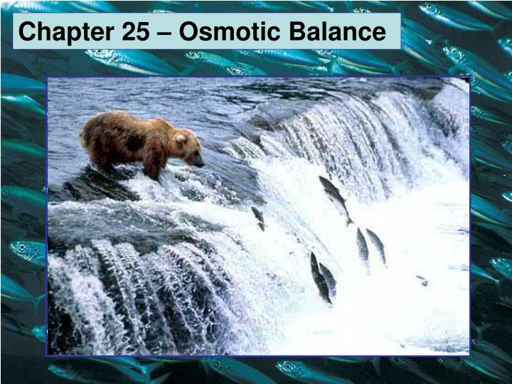 Chapter 25 – Osmotic Balance