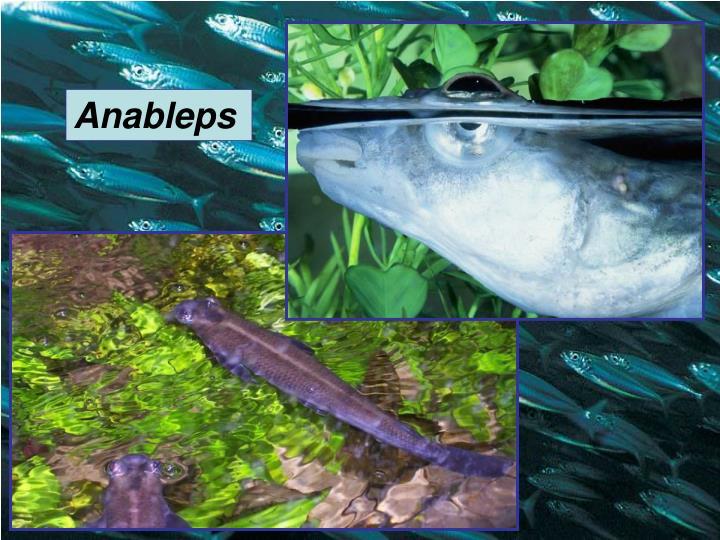 Anableps
