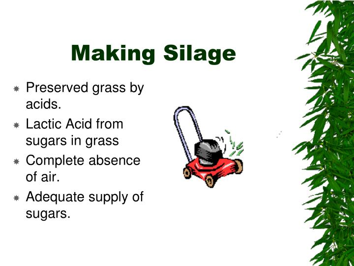 Making Silage
