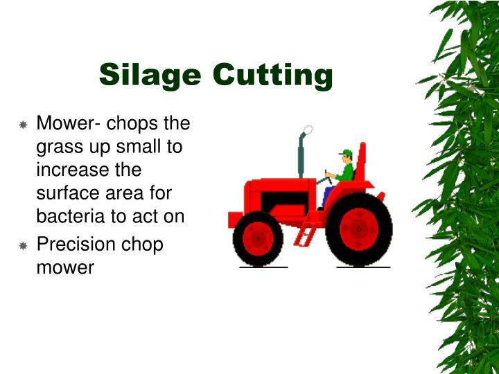 Silage Cutting