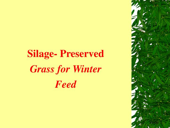 Silage- Preserved