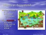 what is an ecosystem1