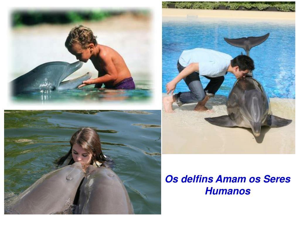 Os delfins Amam os Seres Humanos
