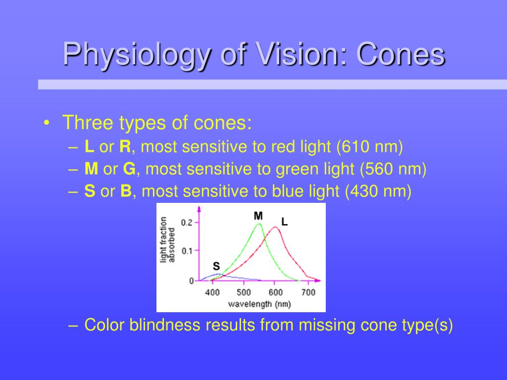 Physiology of Vision: Cones