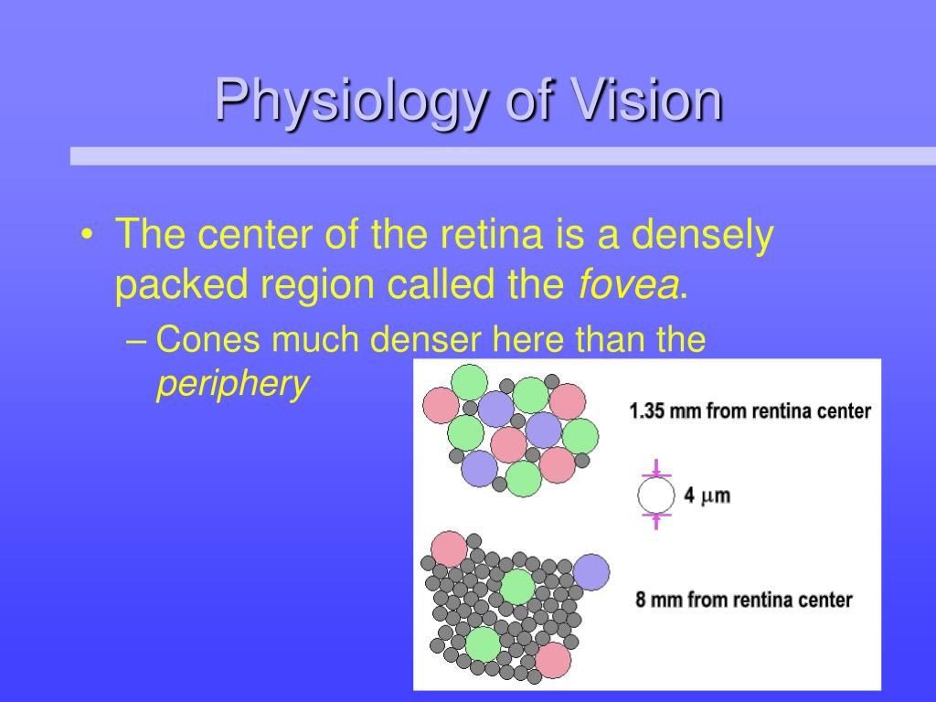 Physiology of Vision